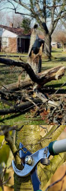 Tree Removal & Pruning Services